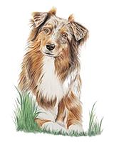 portret zwierzę